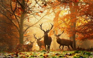 deers-autumn
