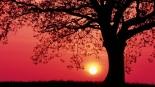 sunrise-with-pine-tree-1